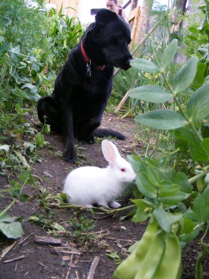 bunnies 021